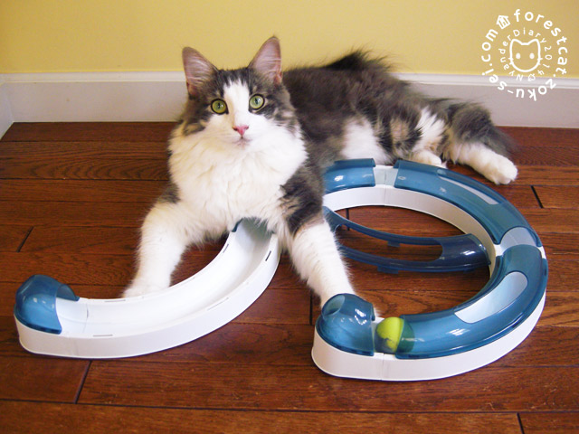 猫のトンネル なんか変かにゃ?
