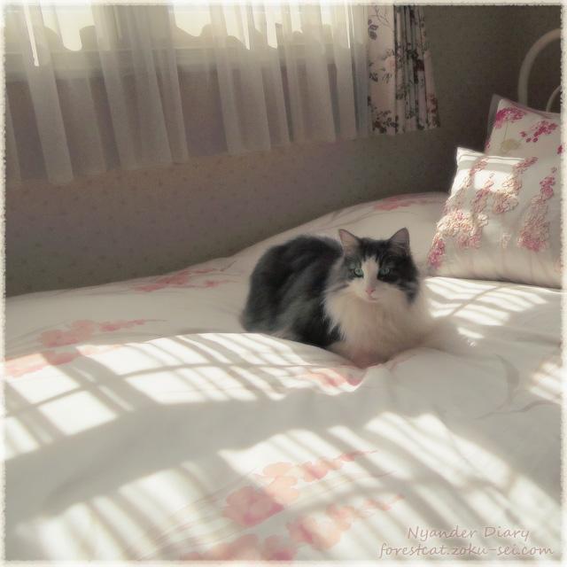 ローラ アシュレイ Laura Ashley のベッドと猫