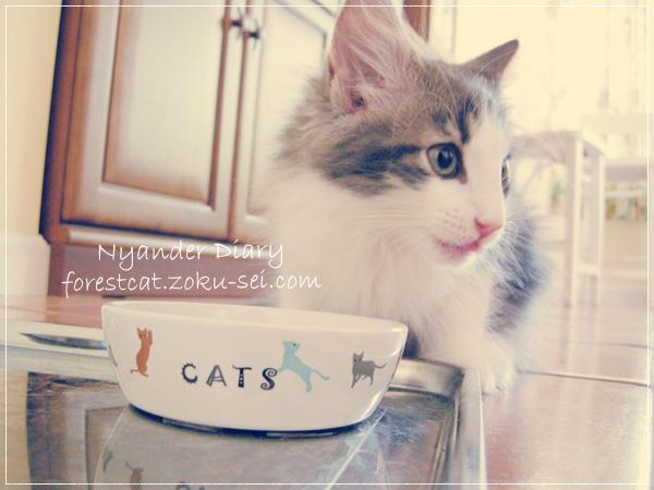 子猫と猫用ごはん皿