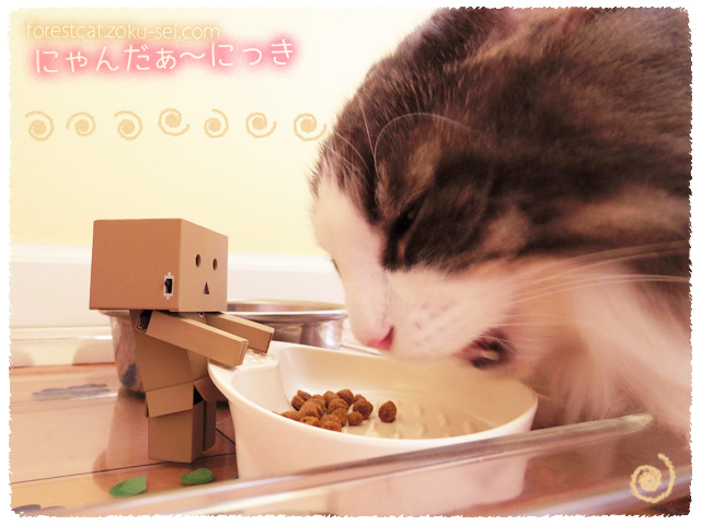 ダンボーが見守る猫のごはんタイム