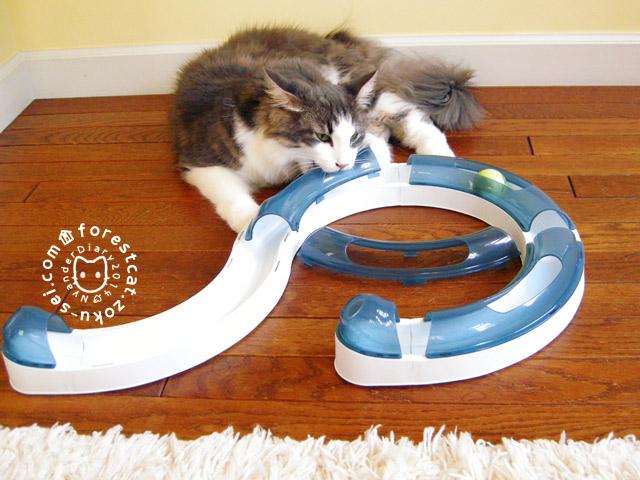 猫のおもちゃ トンネルを破壊する猫