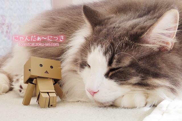 お昼寝中の猫を見守るダンボーミニ