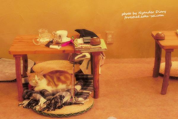 ひざ掛けの上 眠る猫 ふわもこ