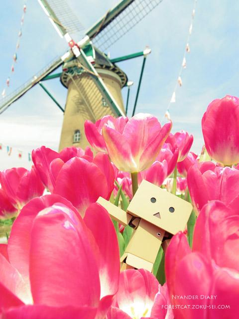 ダンボーと風車とチューリップ