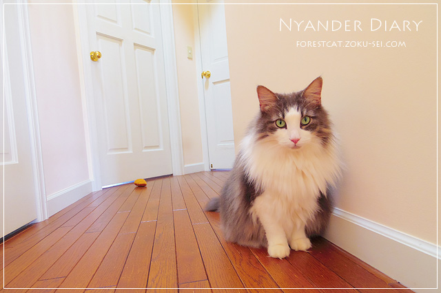 廊下で狙う猫