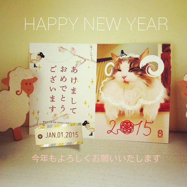 ふわもこ ひつじ猫 2015年