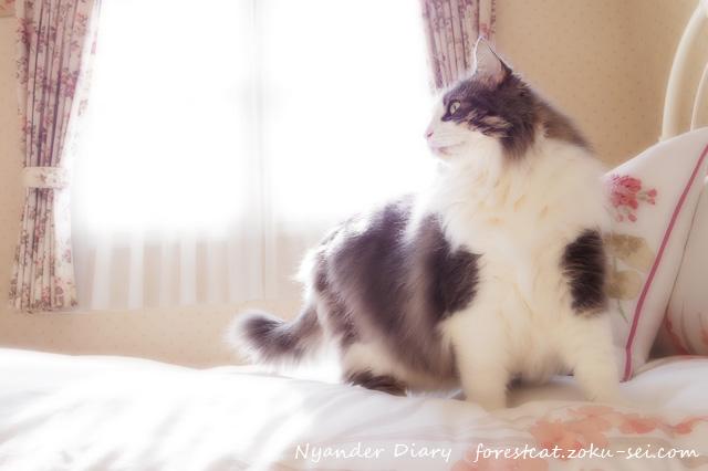 まぶしい窓をバックに立つ猫