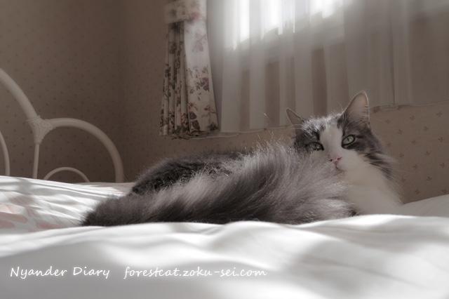静かな午後の日差しが差し込むベッド くつろぐ猫