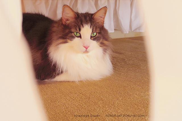 ベッドの下が好きな猫