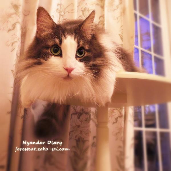 ローラアシュレイ ミニテーブルと猫