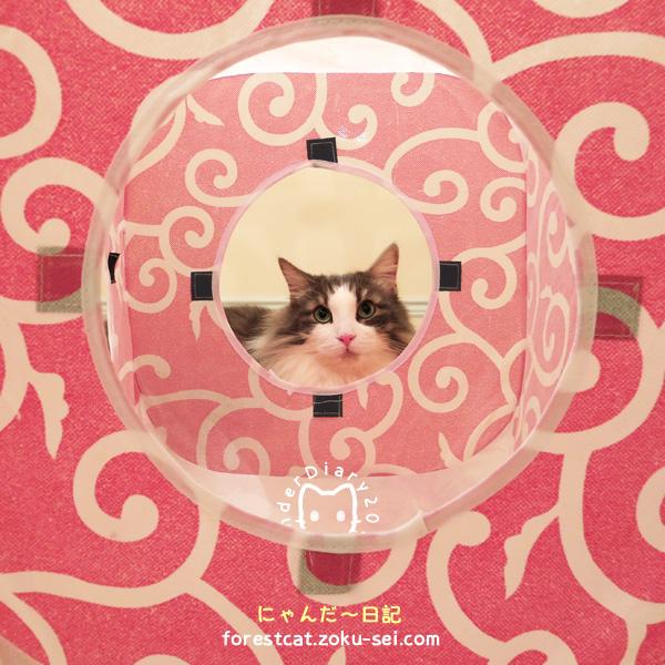 キャットプレイキューブ 可愛い唐草模様 猫おもちゃ