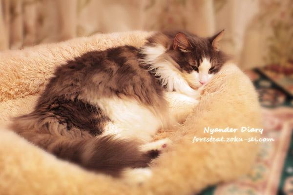 ふわもこベッドで眠る猫
