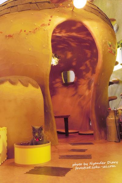 半個室がある 猫カフェ てまりのおうち