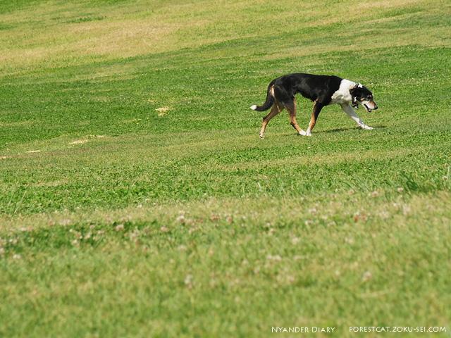 マザー牧場の牧羊犬